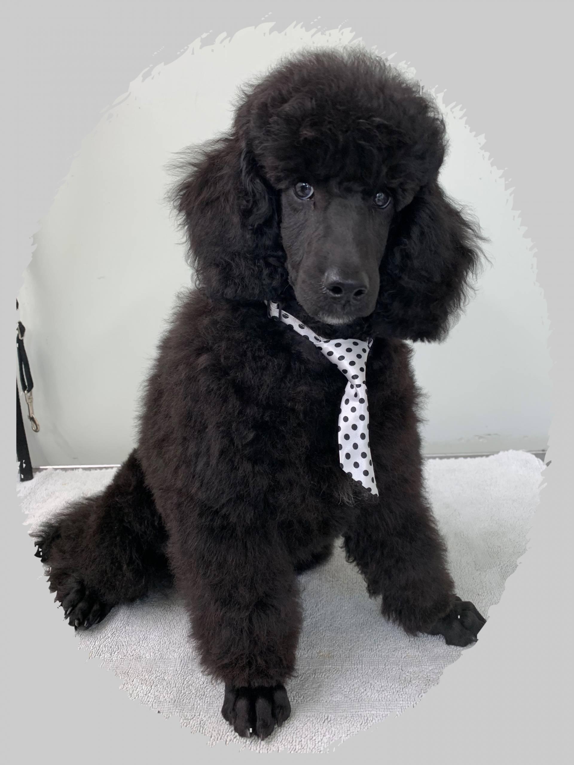 V.I.P. Puppy's