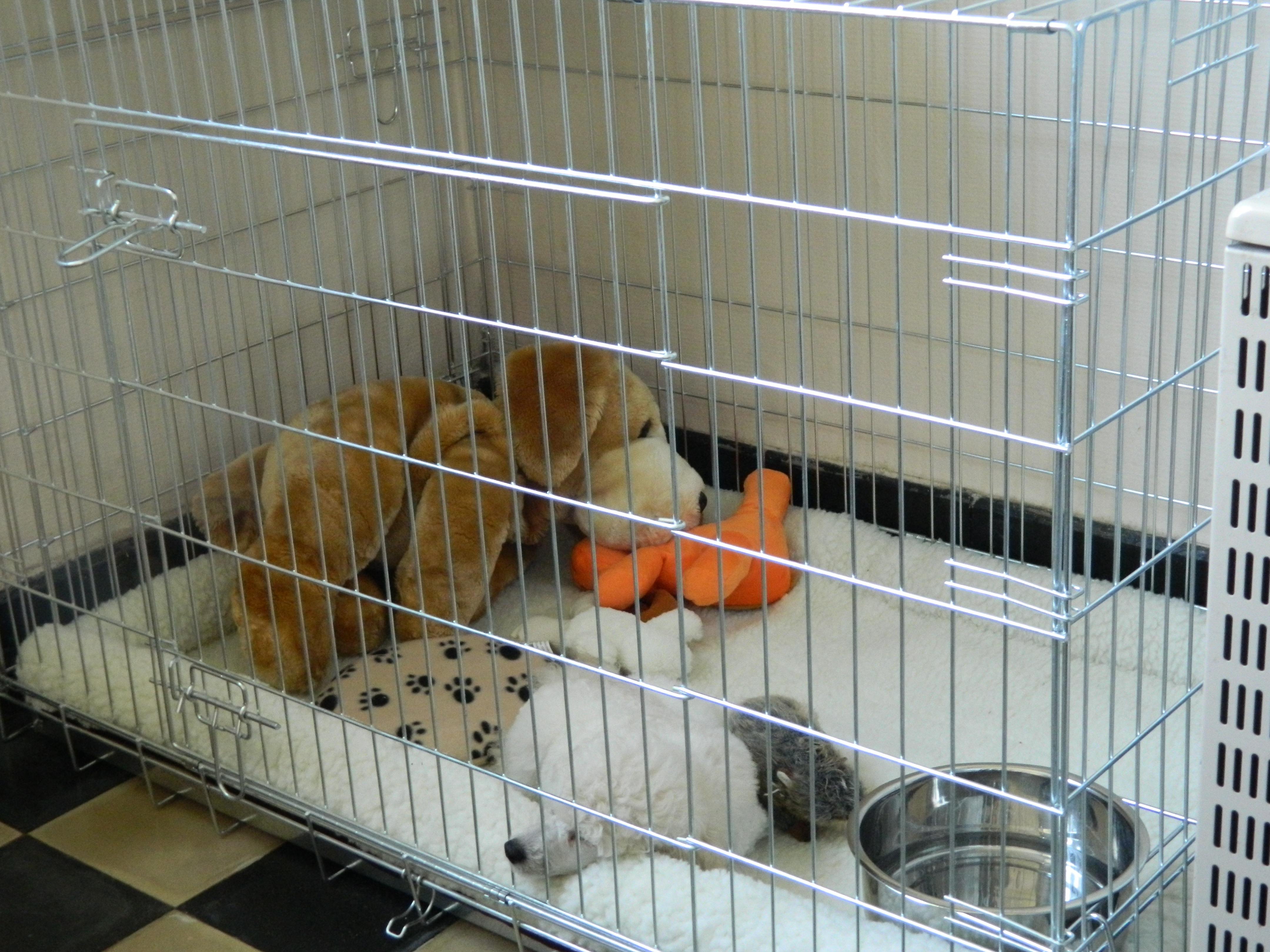 bench voor puppy