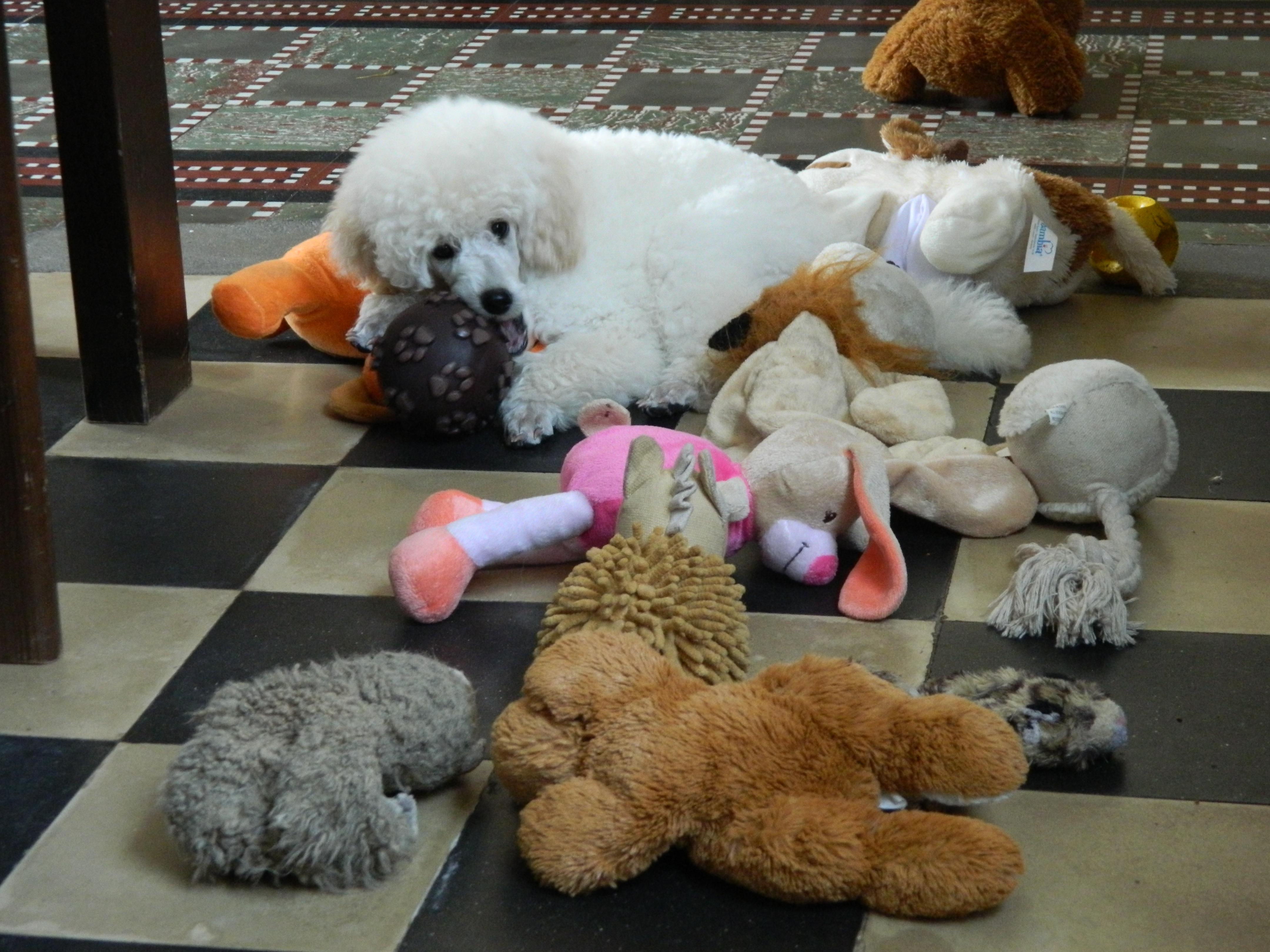 puppy met voldoende speelgoed